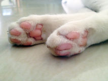 Cat foot paw Royalty Free Stock Photography