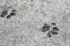 Cat foot prints dried in cement on garage floor Royalty Free Stock Images
