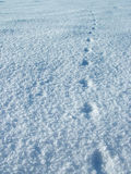Cat footprint. On snow Stock Photography