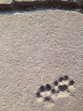 Cat footprints Royalty Free Stock Images