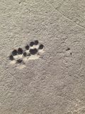 Cat footprints Royalty Free Stock Image