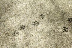 Cat Footprints dans la pierre Photo stock