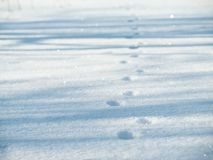 Cat footprints Stock Images