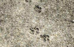 Cat Footprints im Stein Lizenzfreies Stockbild