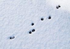 Cat footprints Stock Photos
