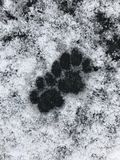 Cat footprints snow. Cat footprints in the snow Stock Image