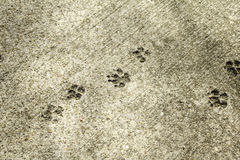 Cat Footprints in Stone. Footprints in stone urban street, animal and texture Stock Photo