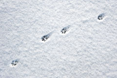 Cat footsteps Royalty Free Stock Photos