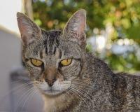 Cat Foreground séria fotos de stock