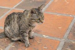 Cat Foreground sérieuse Photos libres de droits