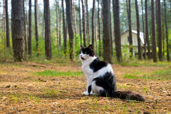 Cat in forest. Ð¡at sitting on a footpath in the forest royalty free stock photography