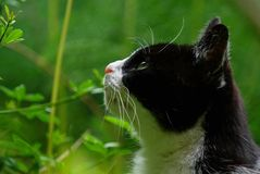 Cat in the forest. Close-up portrait profile picture of a black and white cat in the nature Stock Images