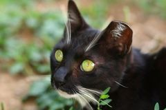 Cat Found de ojos verdes en las monta?as imágenes de archivo libres de regalías