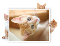 Cat frame Royalty Free Stock Photo
