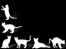 Cat frame Stock Photo