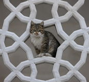 Cat framed by islamic carving at Fatih Camii Istan. Small kitten posing, framed by islamic carving at Faith Camii Istanbul Royalty Free Stock Photography