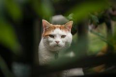 Cat Framed por el follaje Imagen de archivo libre de regalías