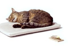 Cat freedom. Sleeping cat with mousetrap on white Stock Photography