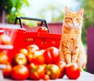 Cat With Fresh Tomatos Imágenes de archivo libres de regalías