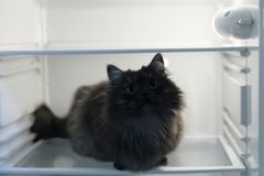 cat in the fridge Stock Photos