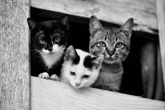 Cat friend. Cat family friend cat cute in the window Royalty Free Stock Images