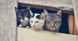 Cat friend. Cat family friend cat cute in the window Royalty Free Stock Image