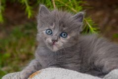 The Cat Royalty Free Stock Photo