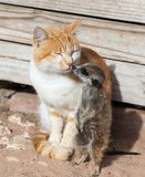 Cat friends Stock Photography