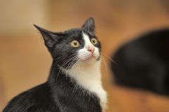 Cat with a frightened look Stock Photos