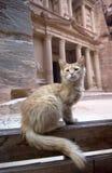 Cat in front of Al Khazneh Treasury ruins, Petra, Jordan Stock Image