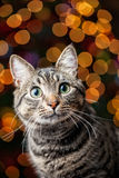 Cat in front of the Christmas Tree Stock Photos