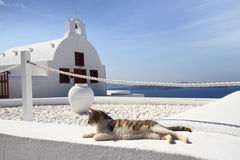 Cat in front of classical church in Santorini Royalty Free Stock Photo