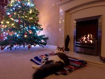 Cat in front of a fire at Christmas. Christmas Tree Stock Photo