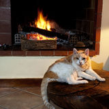 Cat in front of fireplace Royalty Free Stock Photos