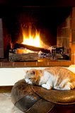 Cat in front of fireplace Stock Images