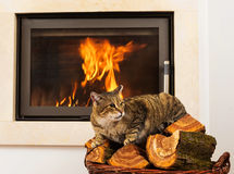 Cat In Front Of Fireplace Stock Photo