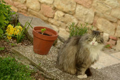 Cat in front of the house Stock Photo