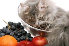 Cat with fruit Stock Photos