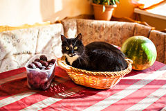 Cat and fruits basket on the table. Funny black-white cat lying in the fruits basket Royalty Free Stock Photography