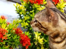 Cat with fullblown flower Royalty Free Stock Photos