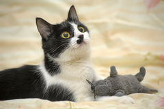 Cat with a fun coloring with a toy mouse Royalty Free Stock Photos