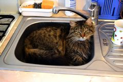 Cat is funny lies in the washroom in the kitchen picture. The cat is funny lies in the washroom in the kitchen picture Stock Photos