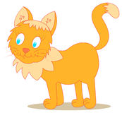 Cat. Funny looking ginger cat on isolated background Royalty Free Stock Image