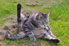 Cat in funny position stock photos
