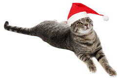 Cat with funny santa cap Stock Image