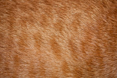 Cat fur Royalty Free Stock Photo