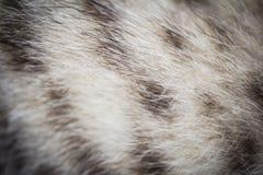 Cat fur Stock Images