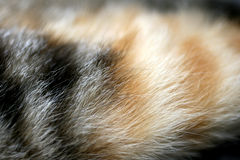 Cat fur Royalty Free Stock Images