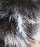 Cat fur Royalty Free Stock Image