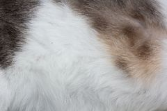 Cat fur  background Royalty Free Stock Photos